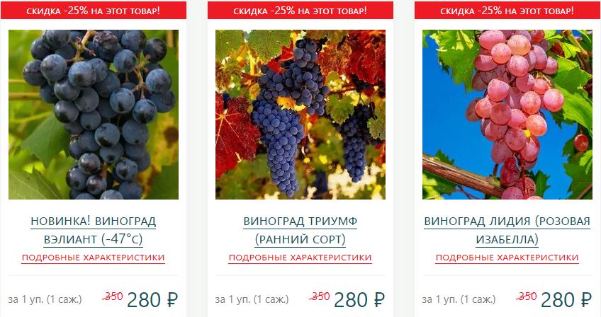 Тройная выгода винограда! (морозоустойчивый) (2)