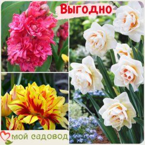 Весенний набор луковичных цветов